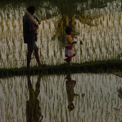 Rice Fields And Dancers124